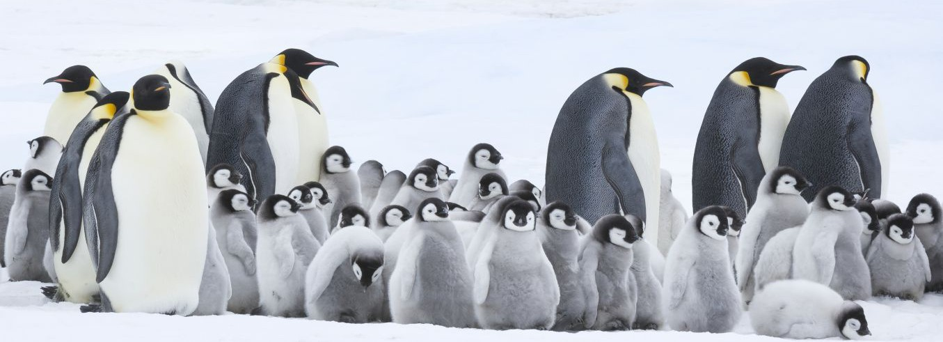 Wild Bunch - MARCH OF THE PENGUINS 2 – THE CALL